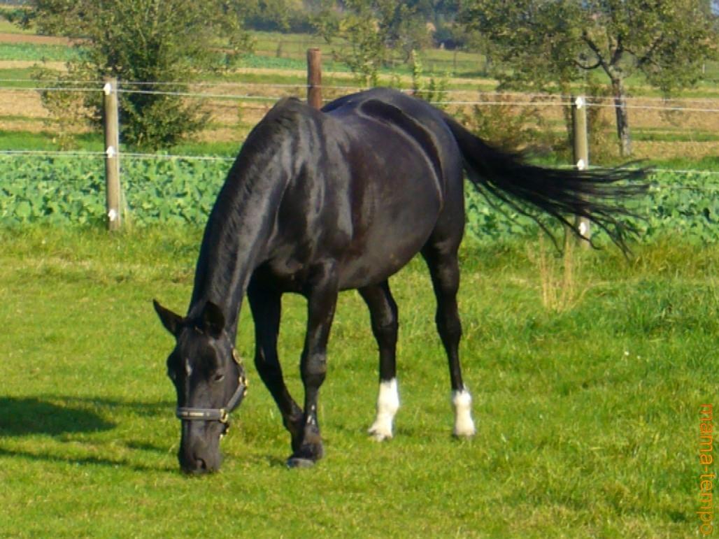Pinterest Diy Home Decor Crafts Pin Pferdebilder 03 Pferde Auf Der Weide Koppel On Pinterest